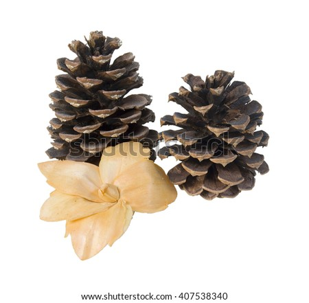 Pinecones and a dried flower for decoration - path included - stock photo