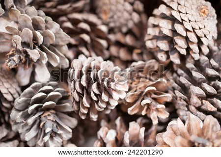 Pinecones background texture for decorations - stock photo