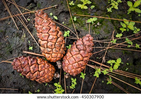 Pinecones on ground with green plants