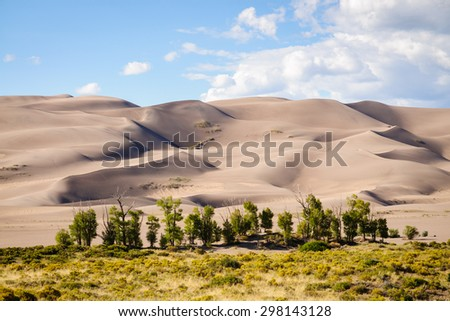 Pines and Dunes at Great Sand Dunes National Park - stock photo