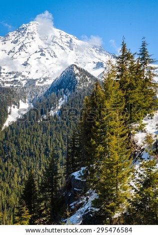 Pines and Mount Rainier National Park - stock photo