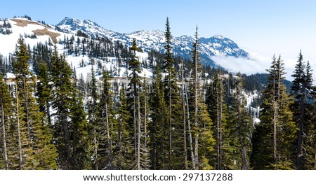 Pines and Snow Capped Mountains at Olympic National Park - stock photo