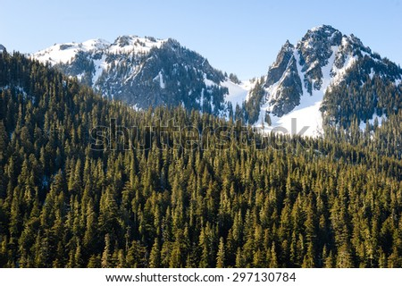 Pines and Snowy Mountains at Mount Rainier National Park - stock photo