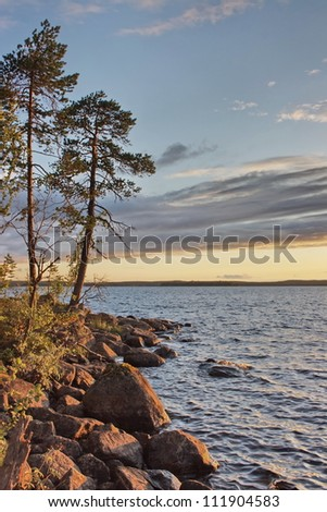 Pines at  sunset on a lakeside. A lake on Suna river, Karelia, Russia