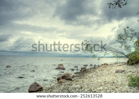 pines by the sea. scenic spots in Europe. - stock photo