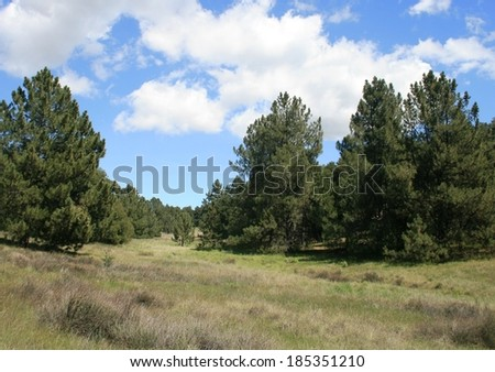 Pines in an alpine meadow in the mountains beneath blue sky and clouds, California - stock photo