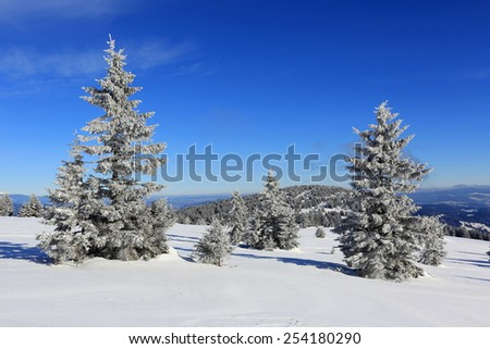 pines in winter mountains at nice sunny day - stock photo