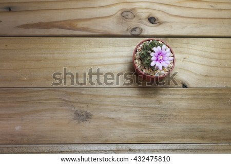 ping cactus flower - stock photo