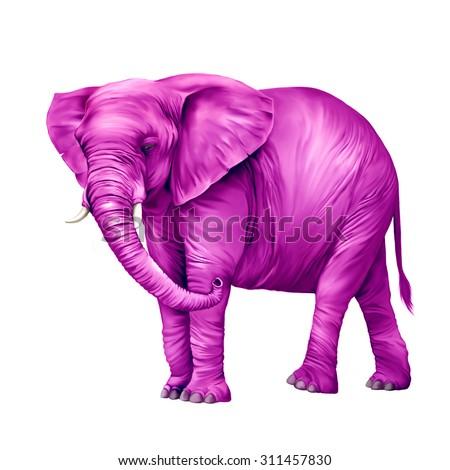 Pink African elephant (Loxodonta africana) on a white background. - stock photo