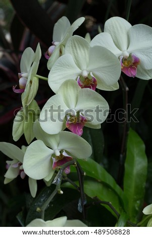Pink and green orchid with dark background