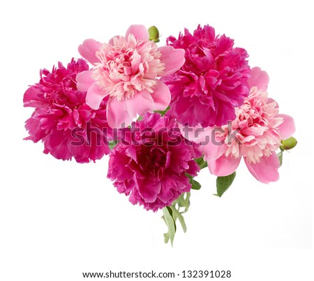 Pink and purple peony bunch isolated on white background - stock photo