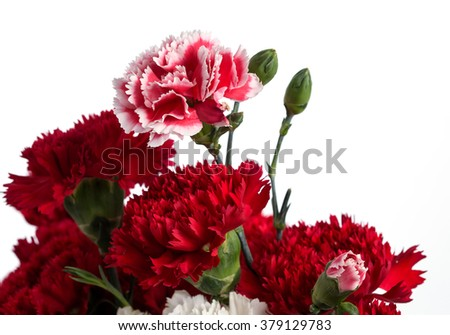 Pink and Red carnation flower on the white background.