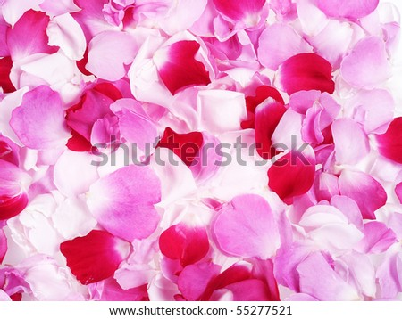 pink and red roses petals