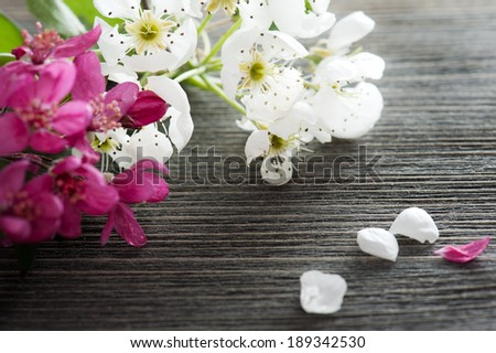 Pink and white blossom on a dark wooden background  - stock photo