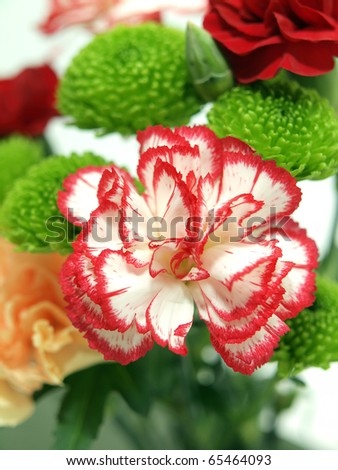 Pink and white Carnation - stock photo