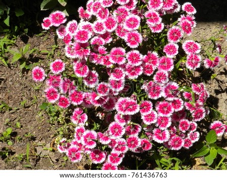 Pink white flowers stock photo royalty free 761436763 shutterstock pink and white flowers mightylinksfo