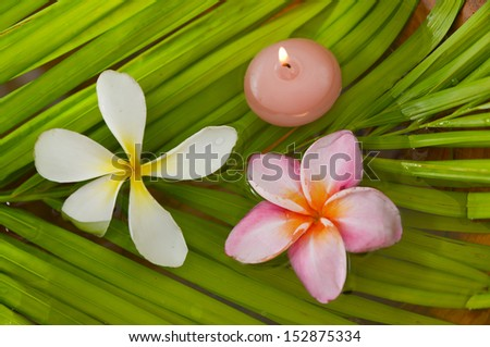 Pink and white frangipani and candle on palm  - stock photo
