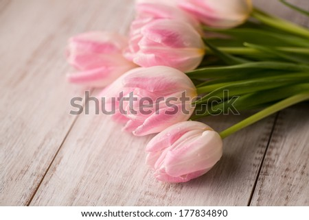 Pink and white pastel Tulips on wood floor from above - stock photo