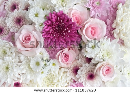 Pink and white roses and daisies as a background - stock photo