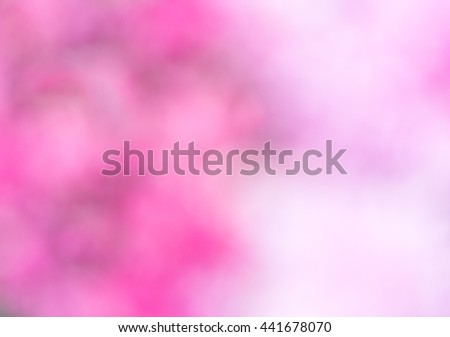 Pink and white tone with blur effect of the pink rose in the garden. - stock photo