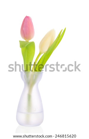 Pink and white tulips in little vase isolated over white background - stock photo