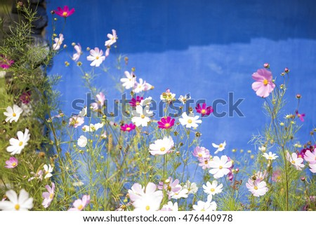 Pink and white wild flowers on a blue background