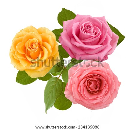 Pink and yellow roses bunch isolated on white background - stock photo