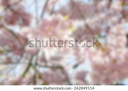 Pink background of de-focused cherry bloom and blue sky - stock photo
