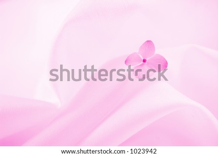 Pink background with hydrangea flower. - stock photo