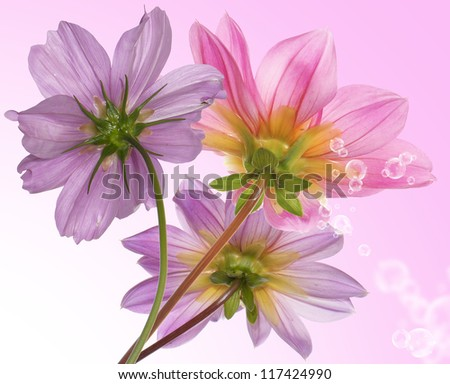 Pink beautiful flower on a white background.Flower border card