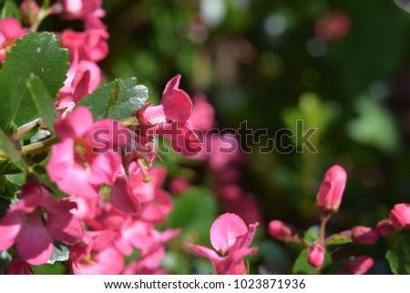 Pink bell flower plant weigela stock photo royalty free 1023871936 pink bell flower plant weigela mightylinksfo