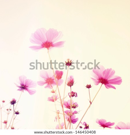 Pink blossom flowers with retro filter effect - stock photo