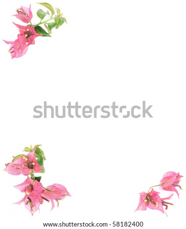 Pink bougainvillea frame on white