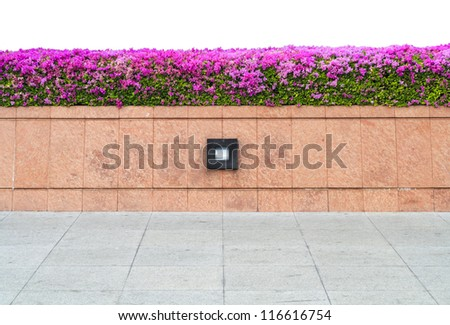 Pink Bougainvillea (Paper flower) in flowerpot wall isolated on white background - stock photo