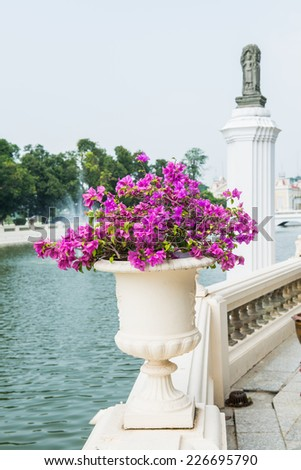 Pink Bougainvillea Plant in Flowerpot at Bang Pa-In Palace, Thailand. - stock photo