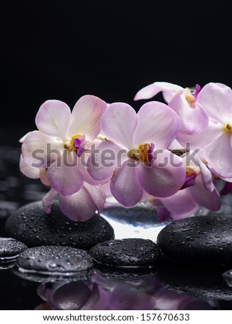 Pink branch orchid with therapy wet stones