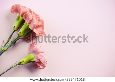 Pink carnation flowers. Pink carnation flowers on background - stock photo