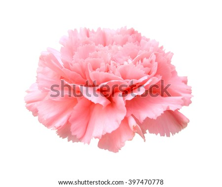 Pink carnation on white - stock photo