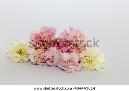 pink carnations and Chrysanthemum isolated on white background