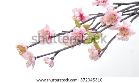 Pink Cherry blossom, sakura flowers isolated on white background, fakeมFlowers made from fabric - stock photo