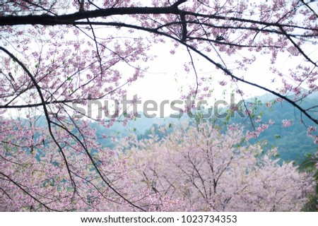 Pink Cherry Blossom TreesSweet And Romance Wallpaper Background