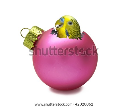 Pink christmas ball with parrot inside