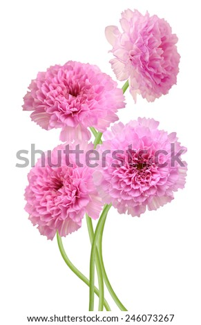 pink chrysanthemum flower bouquet