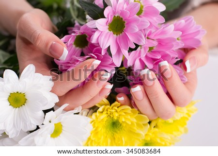 Pink chrysanthemums in female hands. Gentle french manicure.