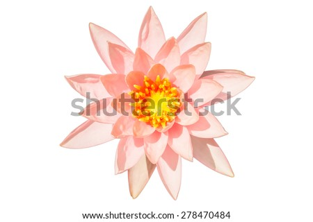 Pink Colour Lotus Flower - stock photo