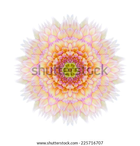 Pink Concentric Chrysanthemum Flower Isolated on Plain Background. Kaleidoscopic Mandala Design. Beautiful Natural Mirrored pattern