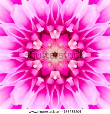 Pink Concentric Flower Center Macro Close-up. Mandala Kaleidoscopic design - stock photo