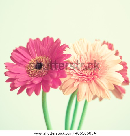 Pink coral  and hot pink daisies over green mint spring background  - stock photo