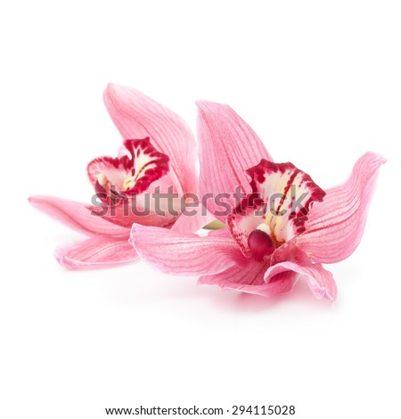 Pink Cymbidium orchid flowers lying down on a white background
