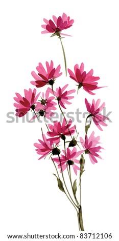 Pink daisies - stock photo